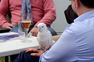 П&П - попугай и пиво