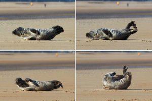 Очаровательный тюлень